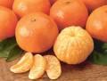 TANGERINE 紅柑 (Citrus recticulata)